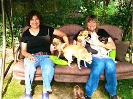 australian shepherd quiz quiz which dog breed are you u2013 iheartdogs com