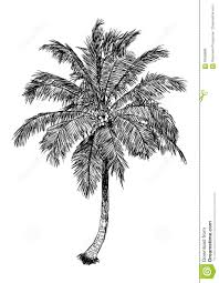 palm tree svg drawn palm tree hand drawn pencil and in color drawn palm tree
