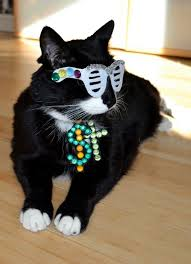 Pet Cat Halloween Costume 80 Pet Halloween Costumes Images Pet Costumes