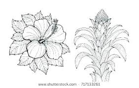 coloring pictures of hibiscus flowers hibiscus flower coloring page tropical flower coloring pages cute