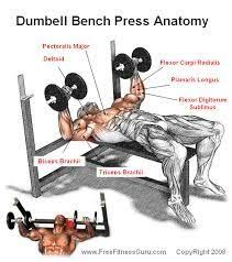 Chest Workout Dumbbells No Bench What Is The Difference Between Using A Barbell Or A Dumbbell For