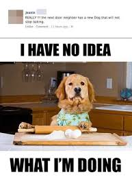Baking Meme - baking dog meme funniest pictures