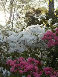 spring garden forest garden