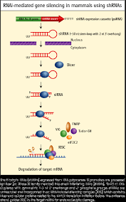 d13 control gene expression rna biology libretexts