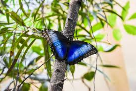 see butterflies at the butterfly palace in branson missouri