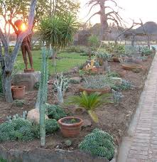 best desert landscaping ideas for clever