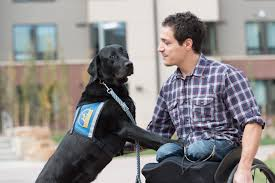 csu u0027s first paraplegic veterinary student presses on overcomes