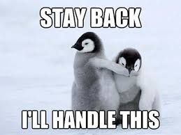 Cute Penguin Meme - a cute message stay back i ll handle this funnymemes