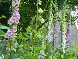 Summer Garden Apartments - summer garden tegg u0027s nose holiday apartmentstegg u0027s nose holiday