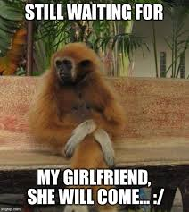 Monkey Meme - waiting monkey meme generator imgflip