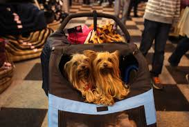 boxer dog crufts 2015 crufts 2014 fashion best and worst dressed dogs metro news