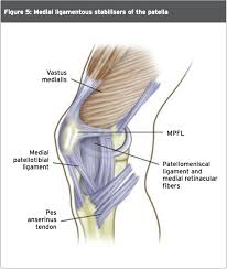 Lateral Patellar Ligament Patella Dislocation Advice For The Young At Heart