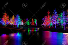 trees tightly wrapped in led lights for the holidays