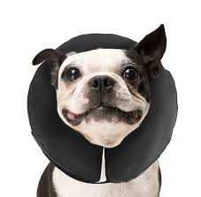 Comfortable Dog Collar The Procollar Is A Comfortable Inflatable E Collar