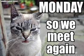 Monday Cat Meme - and again and again and again etc funnies