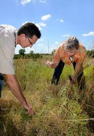 oklahoma native plants tinker u0027s silent land war invasive species battle native oklahoma