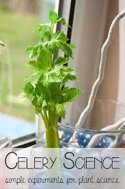 Lab Bench Transpiration 133 Best Botany Images On Pinterest Life Science Botany And Plants