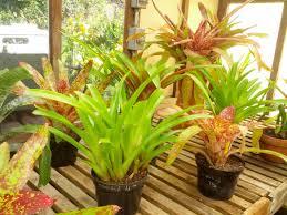 houseplants house plants san mateo arboretum society