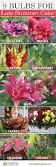 best 25 garden bulbs ideas on pinterest bulb flowers spring
