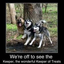 Memes Funny Animals - funny animals pictures with captions 54 pict funny pictures