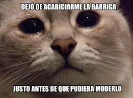 imagenes de los memes que se mueven 16 memes que te enseñarán lo difícil que es ser un gato no es nada