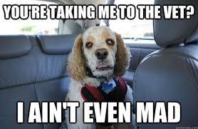Hilarious Dog Memes - dog memes 50 pics