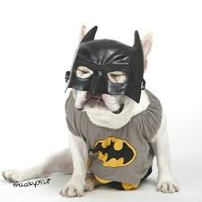 Frenchie Halloween Costume 607 French Bulldogs Images Animals French