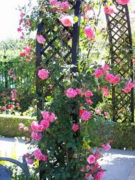 Fragrant Climbing Plants - rose arch provides more color and fragrance in the garden with
