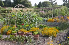 wimpole hall and the walled kitchen garden gardening jules