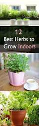 best 25 growing herbs indoors ideas on pinterest growing plants