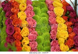 different color roses different color roses yellow stock photos different color roses