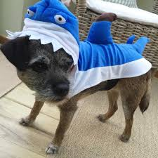 83 of the best dog halloween costumes for your pooch brit co shark this isn t just a halloween costume it also doubles as an outfit for shark week this pup is quite the devoted fan