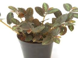 try these houseplants for cleaner air at home healthcentral