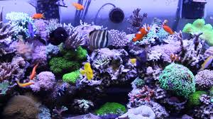 Marine Aquascaping Techniques Rory U0027s 200g Reef Pre Major Re Aquascaping Youtube