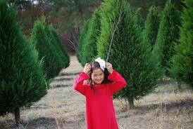 life drafts style clarks hill christmas tree farm 2013