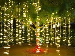 long branch tree lighting holiday lights in tree summer night stock photo image of festive