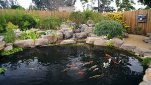 How To Make A Koi Pond In Your Backyard How To Build A Koi Pond Final Youtube
