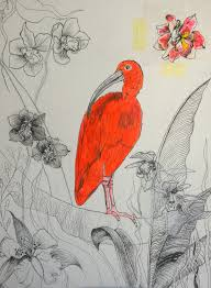 scarlet ibis paola falconi u0027s art blog