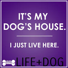 quotable quotes from life dog life and dog
