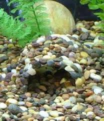 diy fish cave from gutter for the aquarium