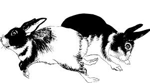 wild rabbit free pictures on pixabay