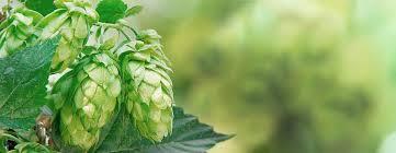 the british hop association british hop association