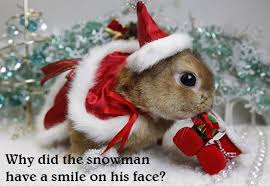 13 dirty christmas jokes with cute animals ragtag riot