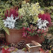 herbstbepflanzung balkon pflanzentipp schmucke herbstgäste für balkon und terrasse