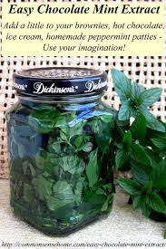 Chocolate Mint Bonnie Plants by Best 25 Mint Herb Ideas On Pinterest Mint Plant Uses Growing