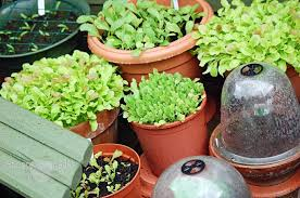 Kitchen Gardening Ideas Vegetables To Grow In Pots Gardens And Landscapings Decoration