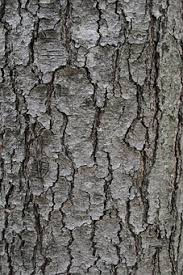 tree bark texture free pictures on pixabay