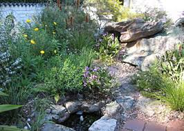creating a small garden pond