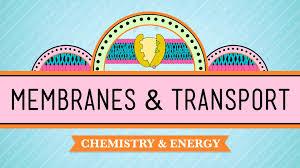 in da club membranes u0026 transport crash course biology 5 youtube