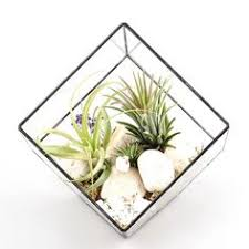 amazon succulents amazon com hanging six surface diamond glass geometric terrarium